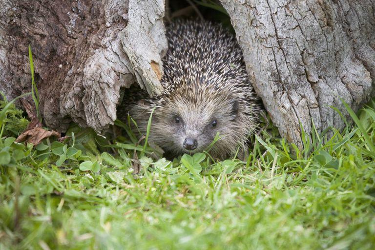 Hedgehog pass in landscape design in 2019.